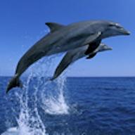 海洋生物图鉴app