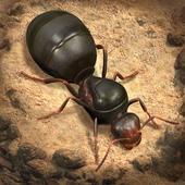 小小蚁国国际版