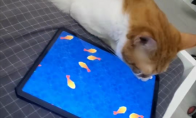 抖音上猫玩的捕鱼游戏逗猫玩具