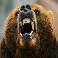 饥饿的攻击熊